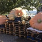 Pumpkin Gratitude